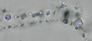 Optical Photomicrograph showing fluid inclusions