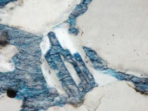 Microscope Image calcite replacing plagioclase