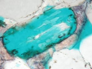 Microscope Image Dissolved Plagioclase